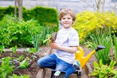 逗人喜爱的矮小的学龄前孩子男孩在春天的种植蔬菜沙拉幼木 免版税库存照片