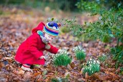 逗人喜爱的矮小的小孩女孩嗅到的snowdrop花 免版税图库摄影