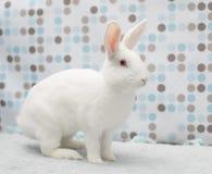 逗人喜爱的矮小的白色复活节婴孩兔宝宝在家在一个蓬松地毯 库存照片