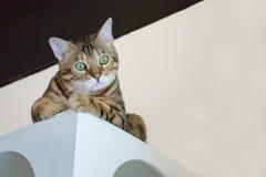 逗人喜爱的矮小的红色小猫坐木桌 免版税库存照片