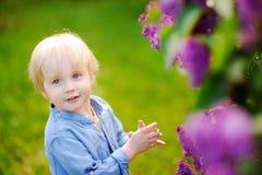 逗人喜爱的矮小的金发男孩在国内庭院里享用开花的丁香在温暖的天 库存图片