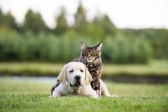 逗人喜爱的矮小的长毛的小小猫和小狗友谊 免版税库存照片