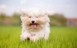 逗人喜爱的空白狗 库存照片