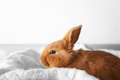 逗人喜爱的红色兔宝宝 图库摄影