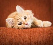 逗人喜爱的红色小猫在长沙发说谎 免版税库存图片