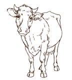 逗人喜爱的自然主义的母牛 库存照片