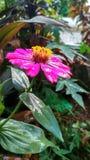 逗人喜爱的花在庭院里 免版税图库摄影