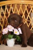 逗人喜爱的花少许纵向小狗 免版税库存照片