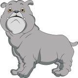 逗人喜爱的英国牛头犬动画片 库存例证