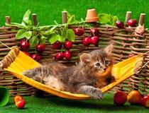 逗人喜爱的蓬松小猫 免版税库存照片