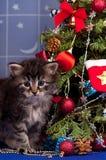 逗人喜爱的蓬松小猫 库存照片