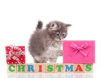 逗人喜爱的蓬松小猫 库存图片