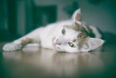逗人喜爱的虎斑猫作白日梦 库存图片