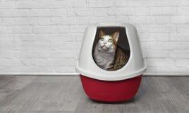 逗人喜爱的虎斑猫在一个红色垃圾箱坐并且查寻 库存照片