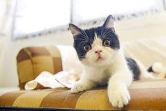 逗人喜爱的虎斑猫 免版税库存图片