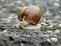 逗人喜爱的蜗牛 免版税库存照片