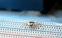 逗人喜爱的蜘蛛照片  免版税图库摄影