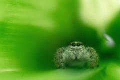 逗人喜爱的蜘蛛 库存照片