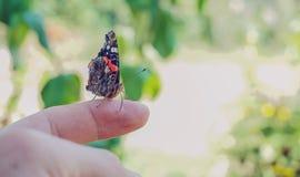逗人喜爱的蝴蝶 免版税库存图片