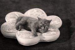 逗人喜爱的表面小猫 免版税库存照片