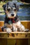 逗人喜爱的被抢救的狗 免版税库存图片