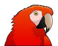 逗人喜爱的被隔绝的鹦鹉红色金刚鹦鹉动画片 免版税库存照片