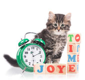 逗人喜爱的西伯利亚小猫 库存图片