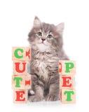 逗人喜爱的西伯利亚小猫 免版税库存图片