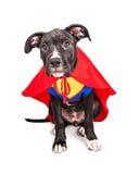 逗人喜爱的超级英雄小狗 图库摄影