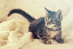 逗人喜爱的镶边小的小猫基于白色被编织的毯子 库存照片