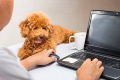 逗人喜爱的长卷毛狗小狗伴随人与在办公桌上的便携式计算机一起使用 免版税图库摄影