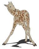 逗人喜爱的长颈鹿 库存图片