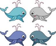 逗人喜爱的集鲸鱼 库存图片
