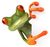 逗人喜爱的青蛙一点 免版税图库摄影