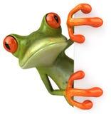 逗人喜爱的青蛙一点 库存照片