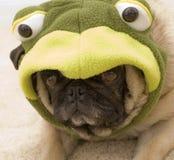 逗人喜爱的青蛙哈巴狗 免版税库存图片