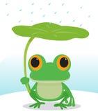 逗人喜爱的青蛙在雨中 图库摄影