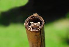 逗人喜爱的青蛙特写镜头掩藏的竹子 图库摄影