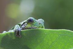 逗人喜爱的青蛙结构树 免版税库存照片