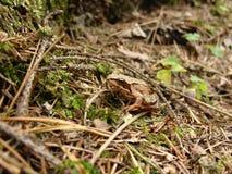 逗人喜爱的青蛙绿色 库存图片