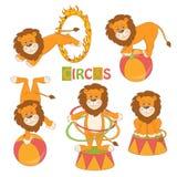 逗人喜爱的马戏狮子的汇集 库存图片
