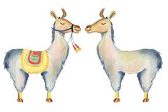 逗人喜爱的骆马漫画人物设置了水彩例证,羊魄动物,手拉的样式 查出的空白背景 免版税库存图片