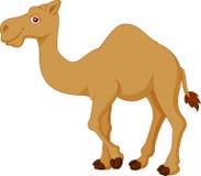 逗人喜爱的骆驼动画片 图库摄影
