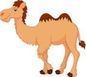 逗人喜爱的骆驼动画片 库存图片