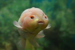 逗人喜爱的鱼 免版税图库摄影
