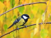逗人喜爱的鸟山雀画象在明亮的黄色l背景的  免版税库存图片