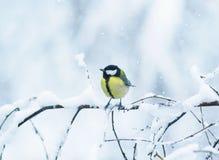 逗人喜爱的鸟山雀画象在用白色雪报道的分支的f 库存照片