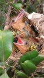 逗人喜爱的鸟 免版税库存图片