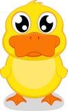 逗人喜爱的鸭子身分 免版税库存照片