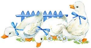 逗人喜爱的鸭子 国内农厂鸟水彩例证 向量例证